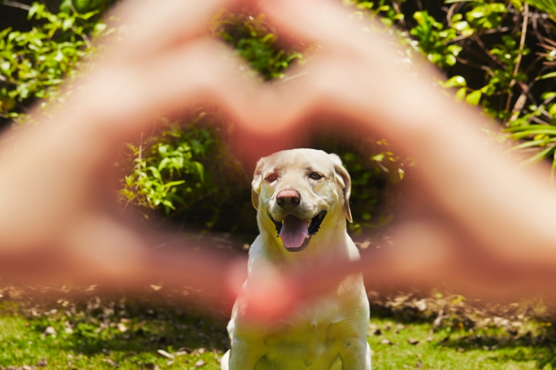 does my dog really love me? Great article on dog loving his or her human
