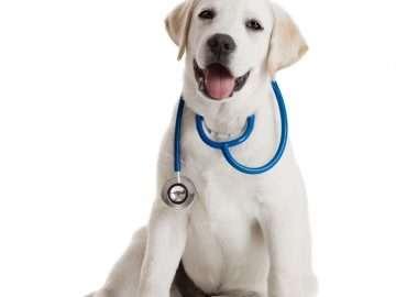 Cute Doctor Dog Helping People Feel Better