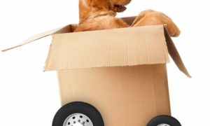 Dog in a moving box- Moving with dog
