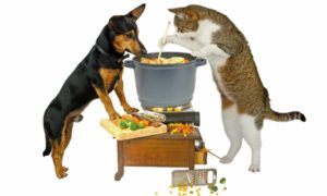 Dog and Cat watching food cook