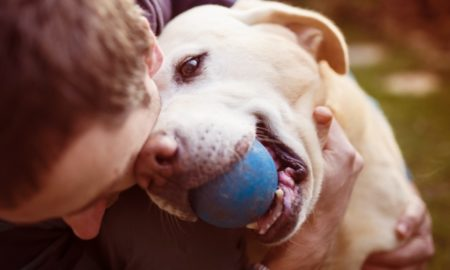 how to make your dog happier, play ball with them.