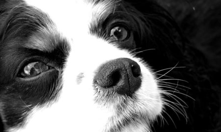 Did you know? Amazing dog facts