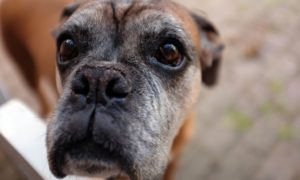Dominated Sad Dog, Abused